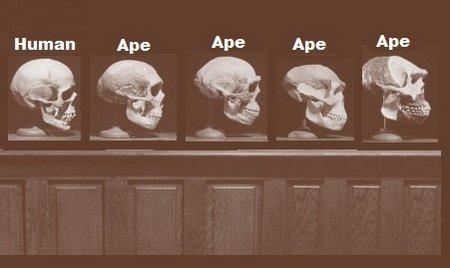 skullsinageorder