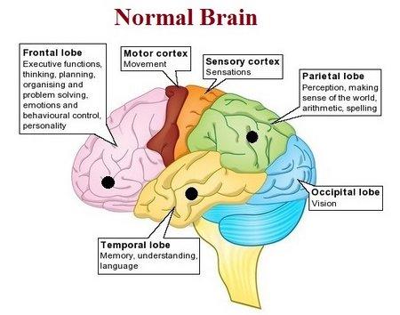 normalbrain